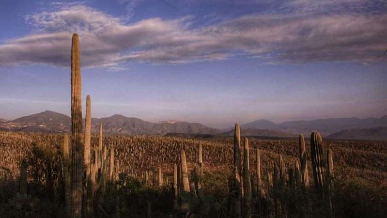 Vista de una parte la reserva de la Biósfera Tehuacán-Cuicatlán desde la zona alta de esta comunidad. (Andrés Lobato)
