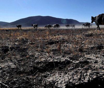 La Administración Nacional de Aeronáutica y el Espacio (NASA) advirtió sobre la gravedad de la sequía en México, donde casi el 85 por ciento del país enfrenta estas condiciones. (Especial)