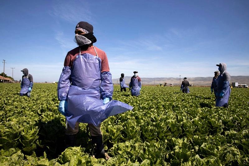 Los trabajadores mexicanos en EU desempeñaron un papel importante durante la pandemia. (Especial)