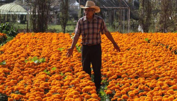 Los productores ya se encuentran listos para la venta de flores de cempasúchil, emblemáticas del Día de Muertos. Foto: Cuartoscuro